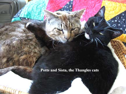 thangles cats hugging